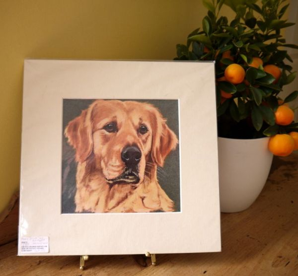 Golden Retriever - head - Ret O2 - 1960's print by Bridget Olerenshaw